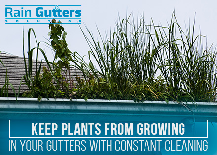 Weeds Before Rain Gutter Cleaning