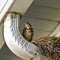 Rain Gutter Cleaning Nest