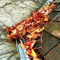 Leaves Clogging a Custom Rain Gutter